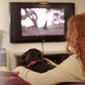 DOGTV: Now Dogs Can Watch TV While Their Owners are At Work