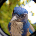 Bird Photo Booth Lets You Take Up Close Pics Of Flying Feathered Friends