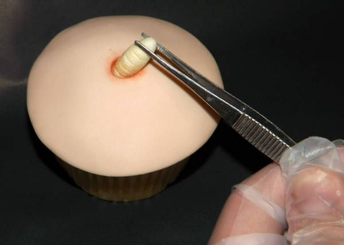 Maggot Cupcakes1