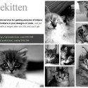 Placekitten Provides You With Kitties to Use as Placeholders