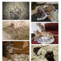 Ca$hcats is a Website that Shows Cool Cats With Cold Hard Cash