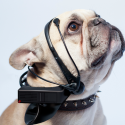 Fancy Headset Translates Dog Thoughts