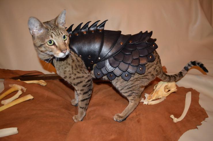 cat-armor-4