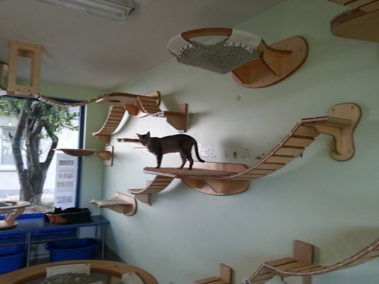 ceiling-furniture-for-cats-by-goldatze-gold-paw-12
