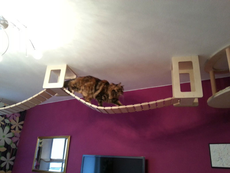 ceiling-furniture-for-cats-by-goldatze-gold-paw-14