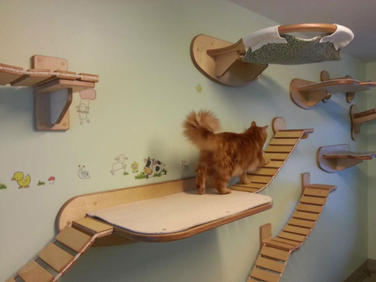 ceiling-furniture-for-cats-by-goldatze-gold-paw-2