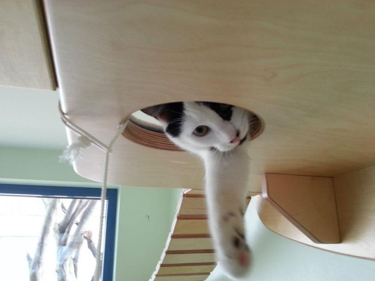 ceiling-furniture-for-cats-by-goldatze-gold-paw-3