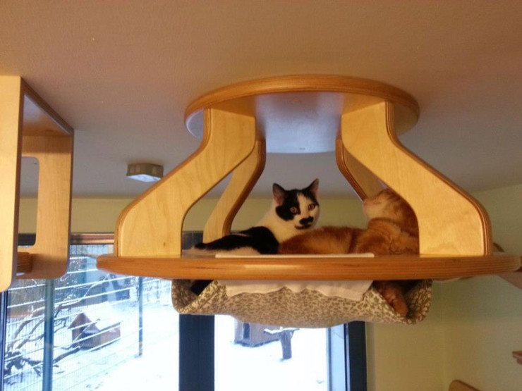 ceiling-furniture-for-cats-by-goldatze-gold-paw-5
