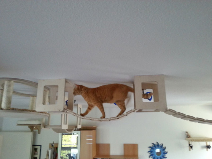 ceiling-furniture-for-cats-by-goldatze-gold-paw-8