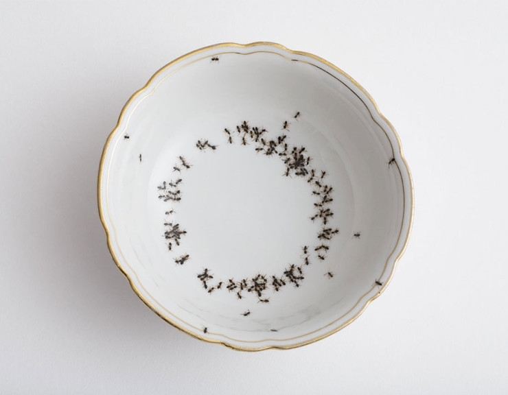 porcelain-dishes-covered-in-painted-ants-11