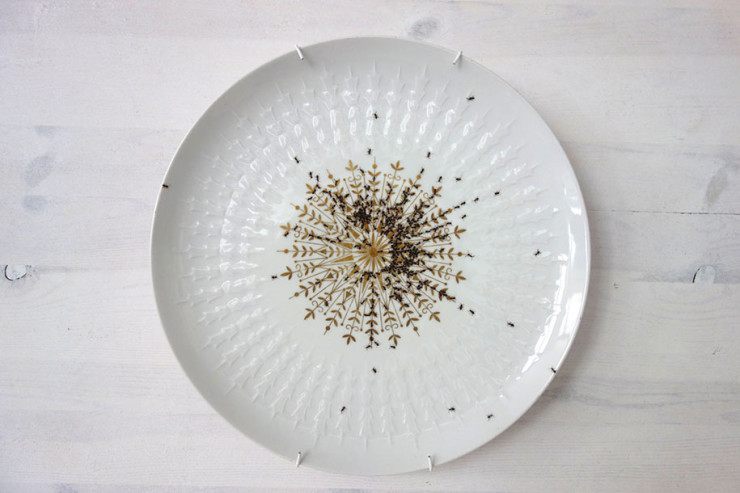 porcelain-dishes-covered-in-painted-ants-4
