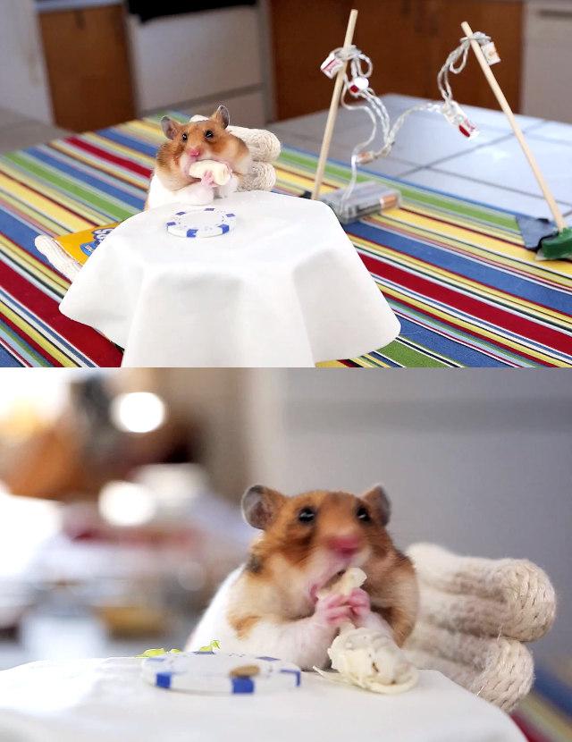hamster-burritos-1