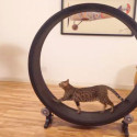 This Giant Hamster Wheel Is Made For Cats