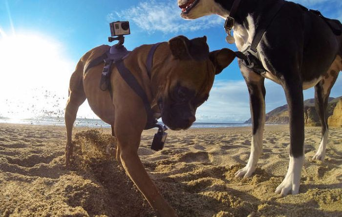 gopro-fetch