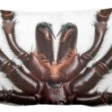 The Stuff of Nightmares: Web Spider Fangs Pillow