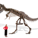 $100k Gets You A Life-Size T-Rex Skeleton Replica