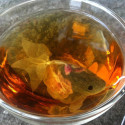 Fish Tea Bags: Truly Fish Out Of Water