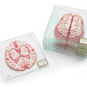 Stackable Brain Specimen Coasters For The Scientist In You