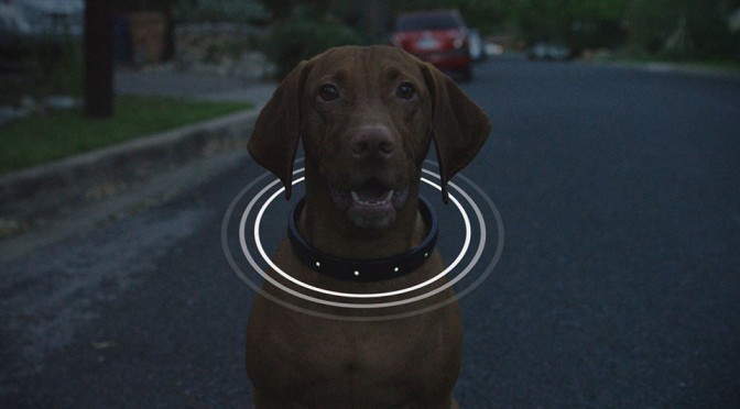 connected-collar-4