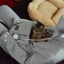The Mewgaroo Hoodie Has a Special Pouch To Carry Your Cat In