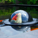 Floating Fish Dome Lets Your Fish Take A Peek Over The Surface
