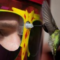 Wearable Feeder Mask Lets You Get Face to Beak With Hummingbirds