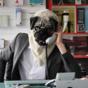 Pug Mask: It's a Pug Life