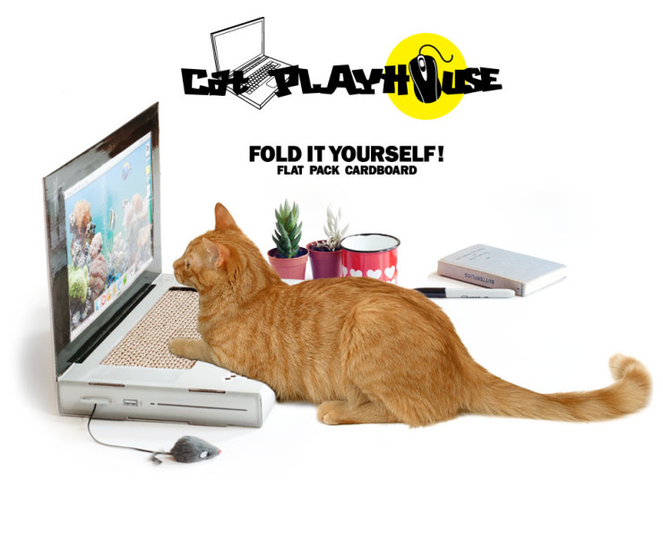 cattop_webpage_01_01