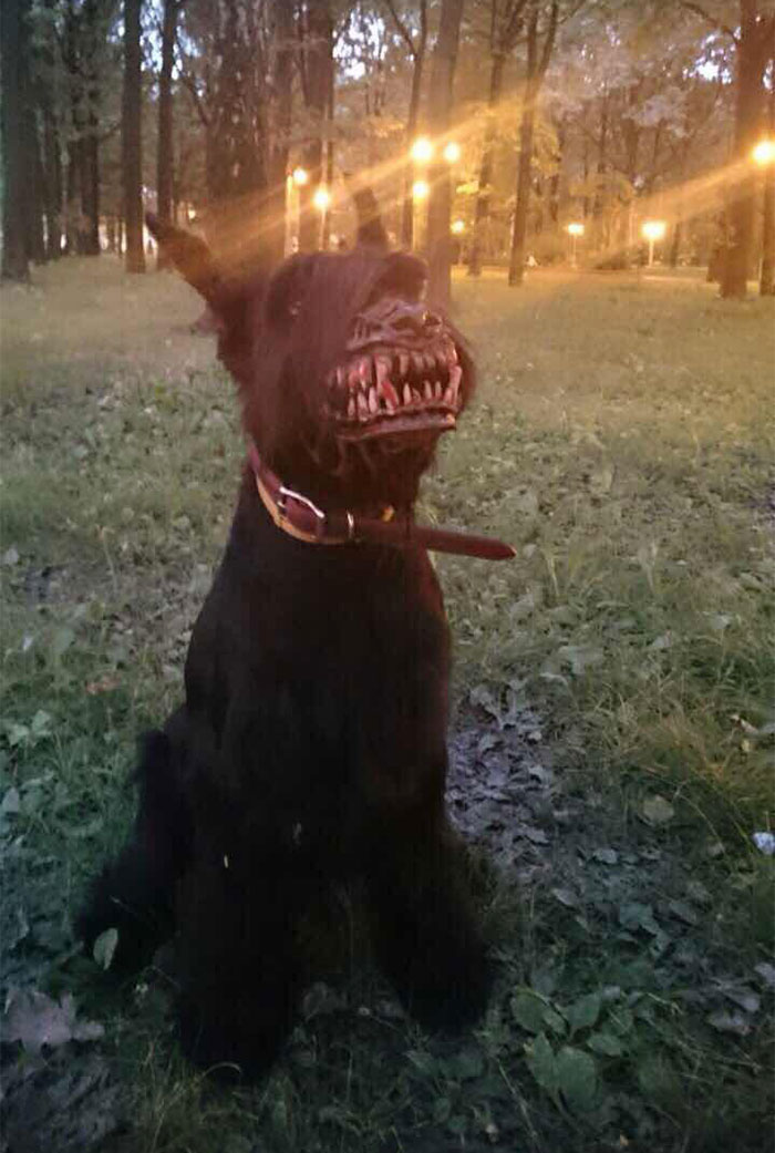russian-werewolf-dog-muzzle-3