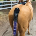 Tail Light LED System Keeps You Safe… On A Horse