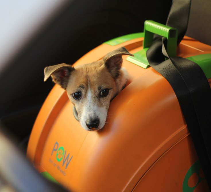 pet-on-wheels-carrier-motorcycle-bicycle-9