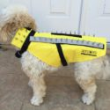 A Prickly Armored Vest To Protect Your Little Dog From Attacks