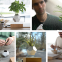 Get Some Levitating Plants For Your Office