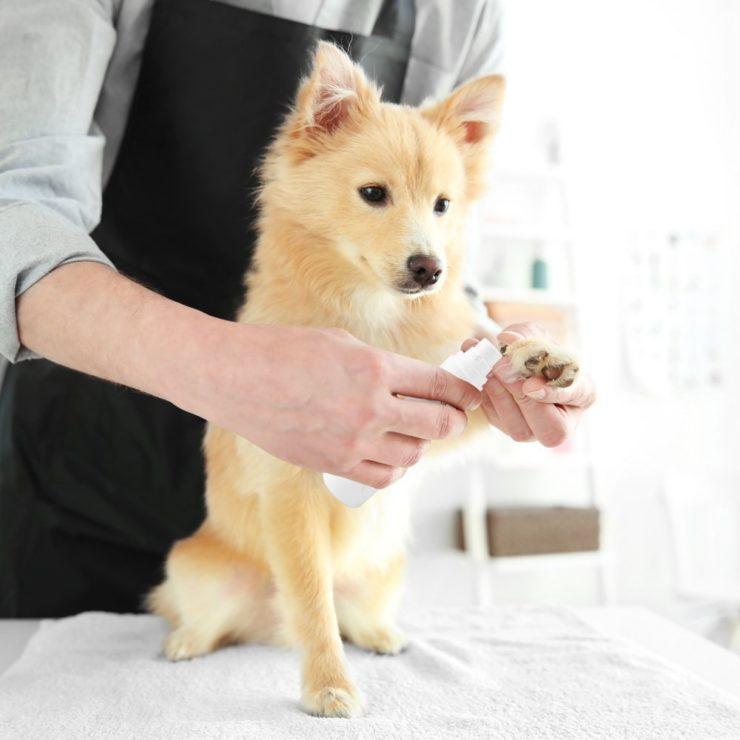miPets Pet Nail Grinder